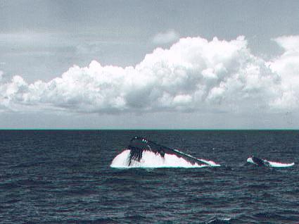 ' ' from the web at 'http://www.subguru.com/nautilus/571_surfacing.jpg'